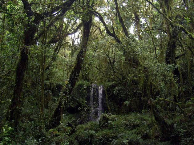 Trooppista sademetsää Kilimanjaro-vuoren lähistöllä Tansaniassa.