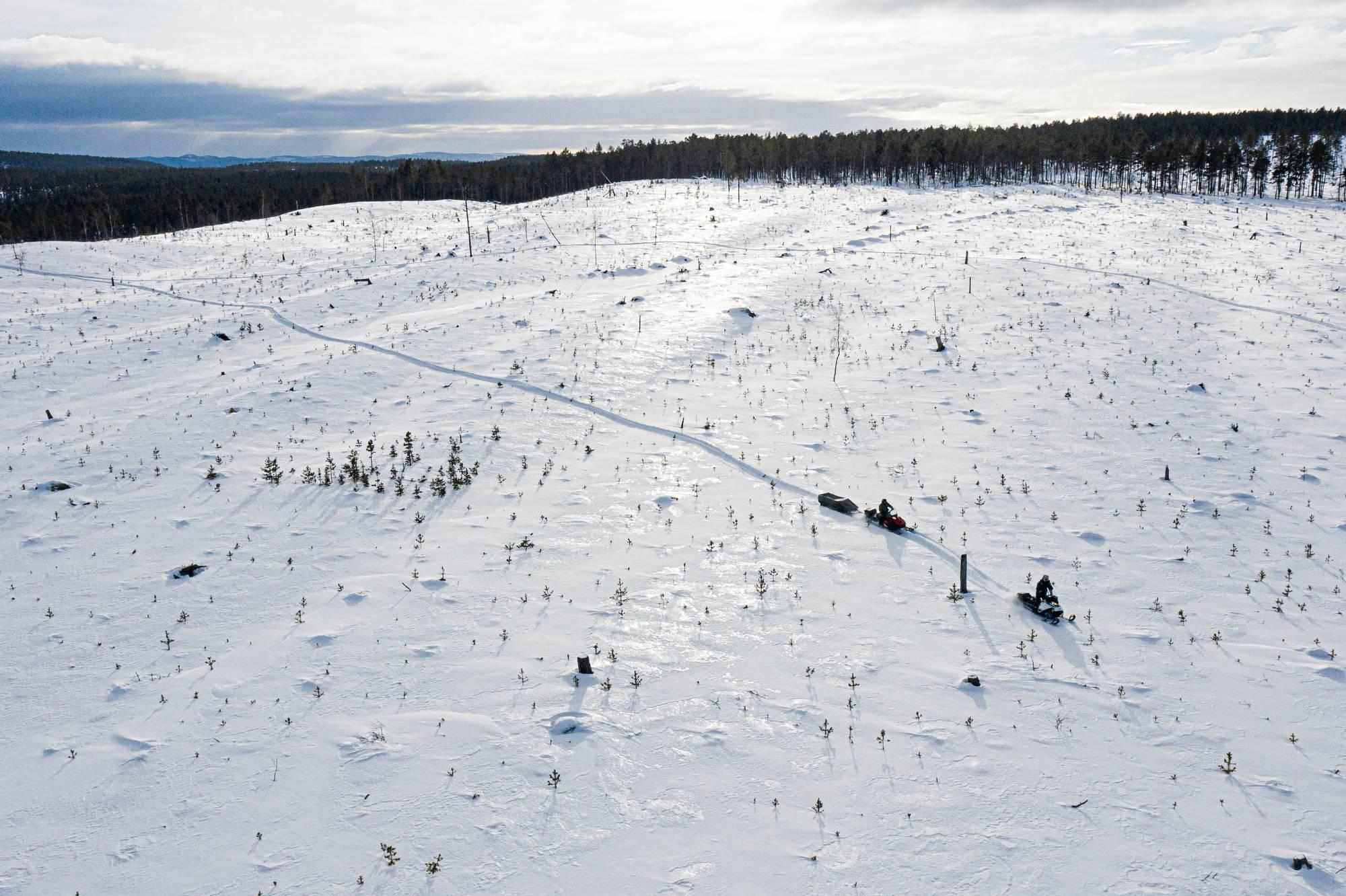 Muddusjärven paliskunnan talvilaidun on kadonnut avohakkuussa.