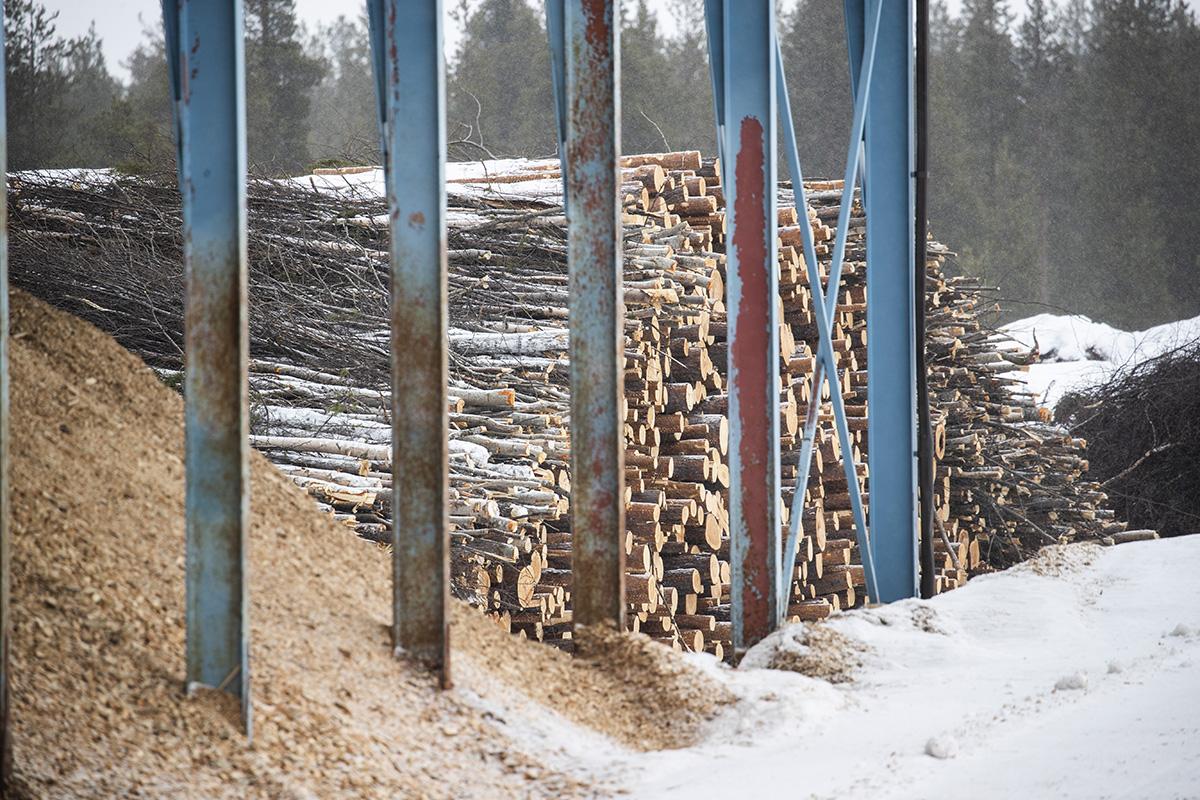 Aikion tilan, Kaapin-Matin, ikimetsä kohoaa vaaralle Inarijärven luoteiskolkassa.