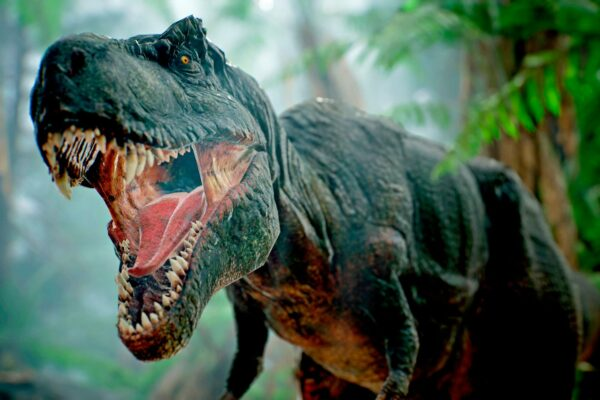 Tyrannosaurus rexejä eli nykyisen Pohjois-Amerikan alueella.