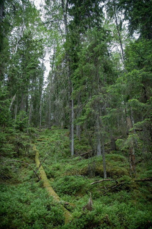 Evon retkeilyalueesta yhteensä noin 500 hehtaaria on luonnonsuojelualuetta.