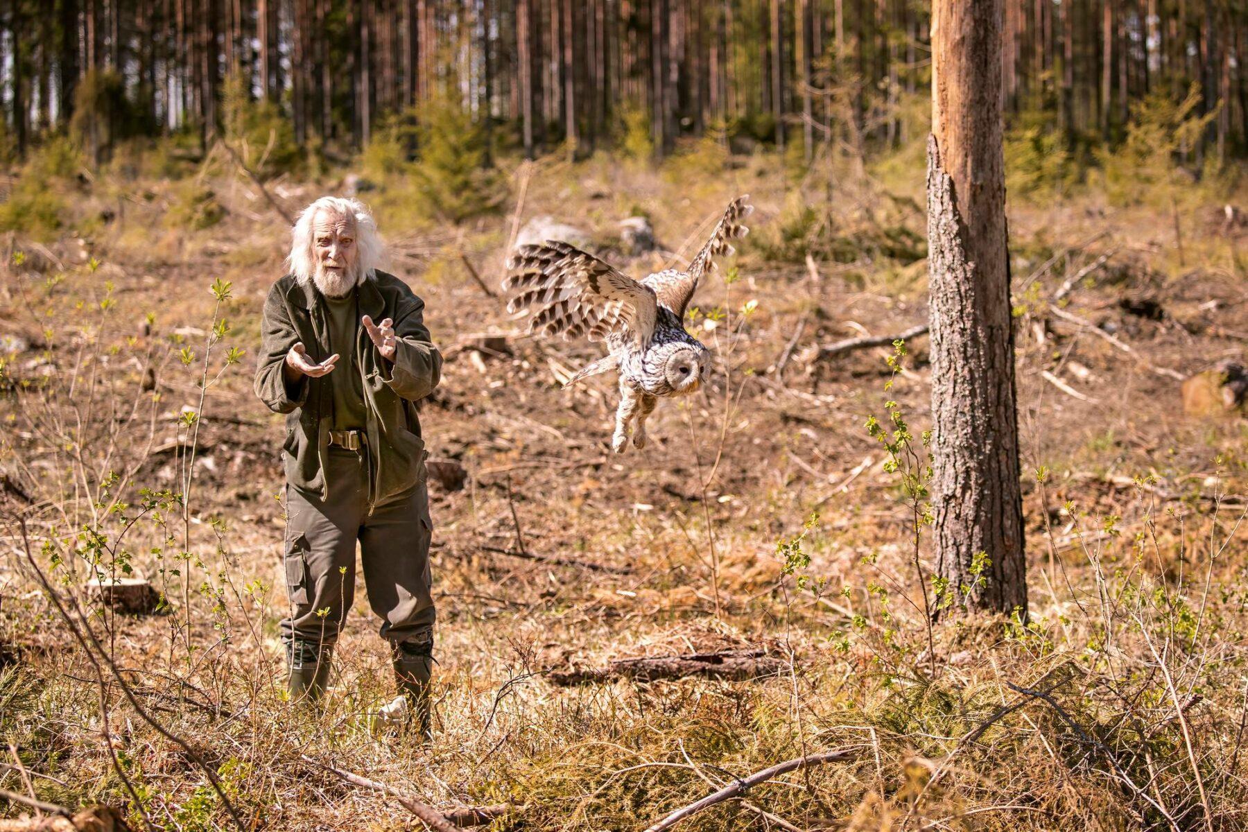 Pertti Saurola vapauttaa 14-vuotiaan viirupöllönaaraan tutkimuksen jälkeen.
