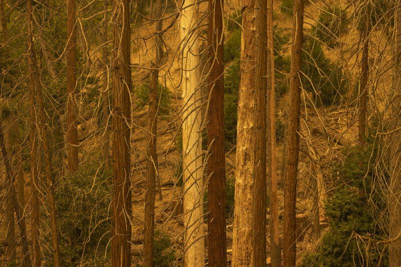 Kuivuus altistaa Kalifornian pahoille metsäpaloille.