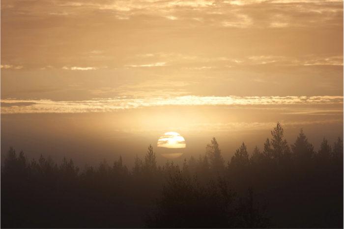 ◼Suomessa on metsää neljä hehtaaria jokaista suomalaista kohti.