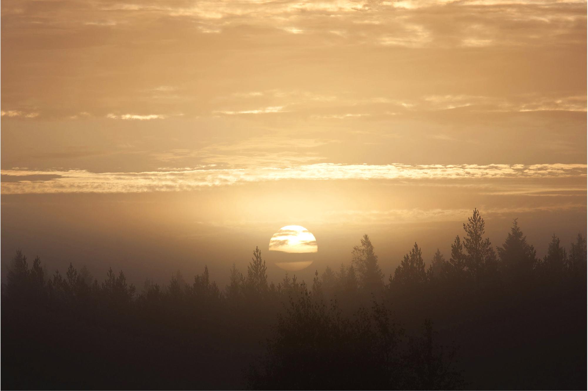 Suomessa on metsää neljä hehtaaria jokaista suomalaista kohti.
